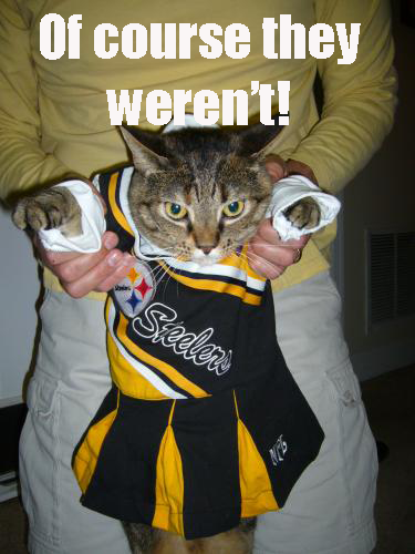 pittsburgh_steelers_steelers_cat_v2uzyaD3.sized